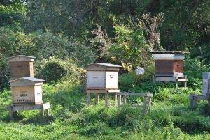 la prairie municipale du mesnil ,le rucher