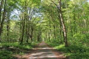 la forêt de saint-germain-en-laye, plan et parking