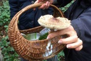 découverte des champignons en forêt de saint germain en laye