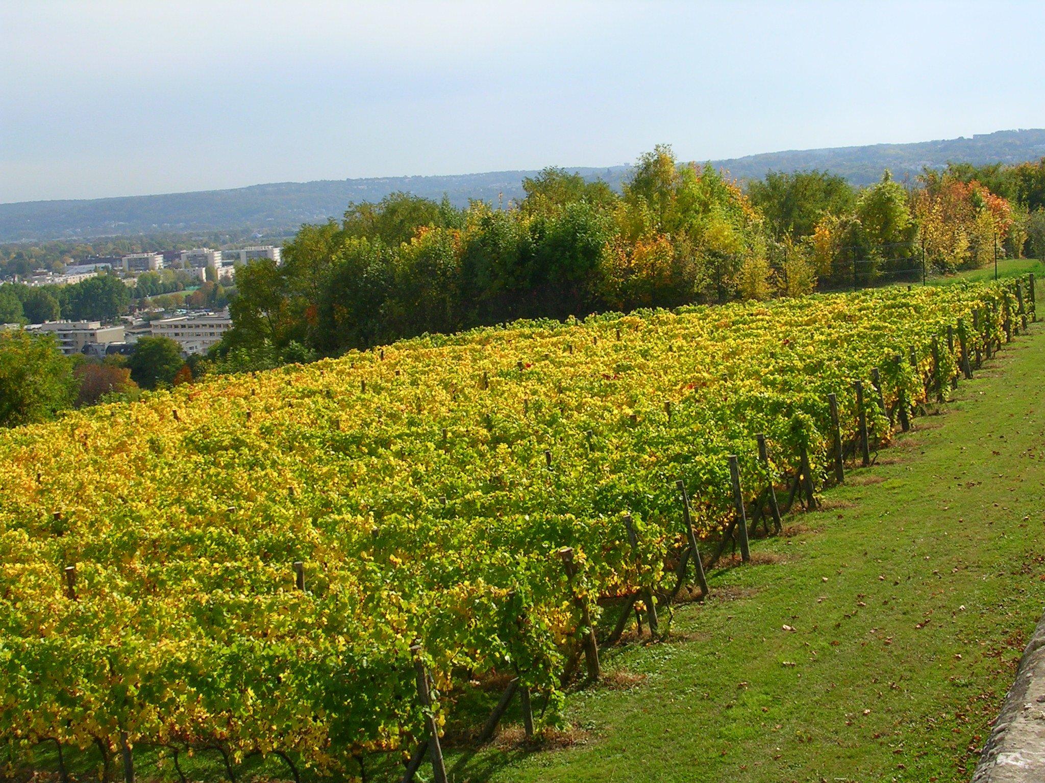 Les vignes le pecq saint germain en laye saint germain - Office de tourisme de saint germain en laye ...