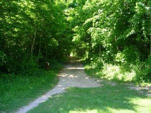 le sentier de la salamandre en forêt de Saint-Germain-en-Laye