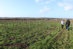 Clos des Vieilles Vignes de Montesson