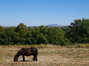 Poney en lisière de forêt de Saint-Germain