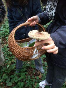 trouver champignons Yvelines